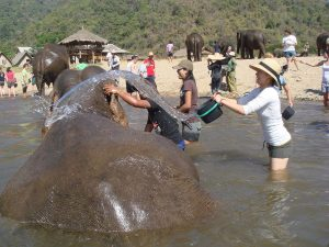 Volunteers Washing Elephants